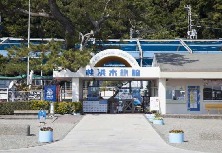 水族館 桂浜 #自宅で楽しむ動物園・水族館:第1回・桂浜水族館「生きものも飼育員もみんな主役」